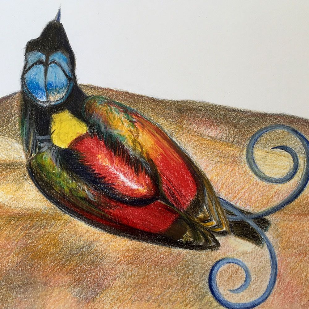 Bird Of Paradise, Color Pencil On Paper, 20x30 Cm, 2016