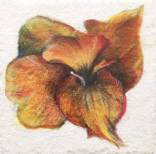 Canna, Watercolor And Pastel On Handmade Paper, 15x15 Cm, 2015
