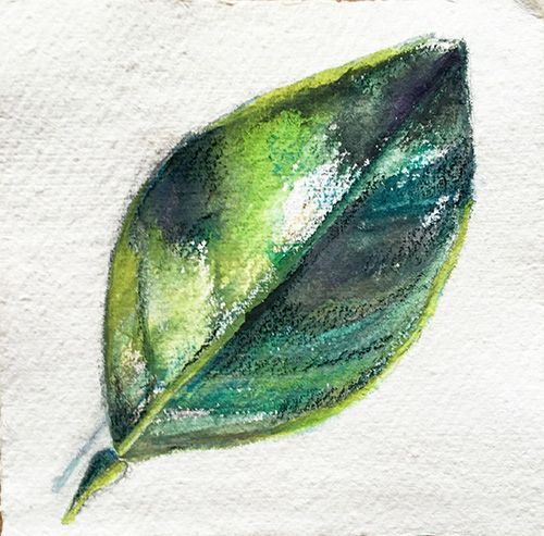 Leaf Of Lime, Watercolor And Pastel On Handmade Paper, 15x15 Cm, 2015